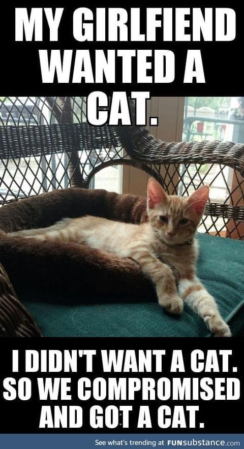 #catsrule