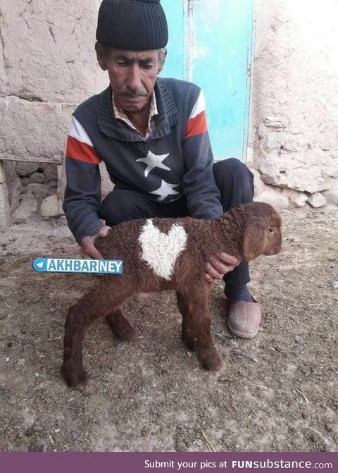 Little lamb born with a heart mark in a village near our town.