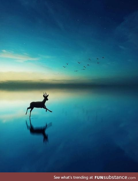 Deer prancing through the water