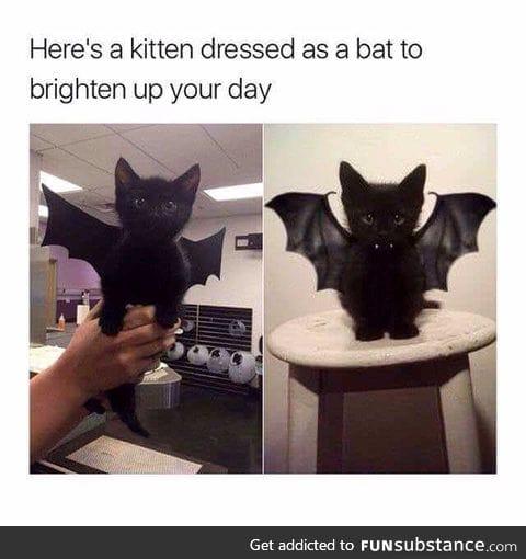 Nana nana nana nana Batcat!