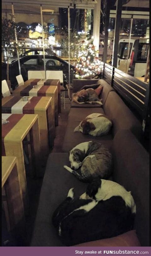This coffee shop in Greece lets the stray dogs sleep inside every night