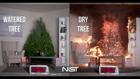 If you have a Christmas Tree, please water it every day (dry vs watered tree)