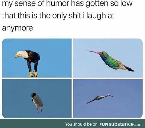 Wingless bird