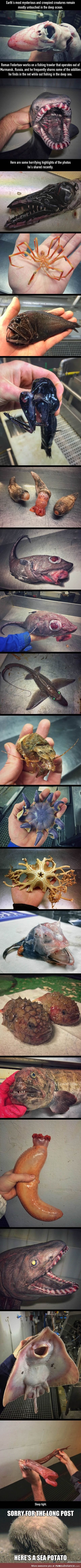 Crazy creatures from the depth of the ocean