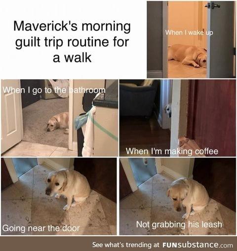 Puppy guilt trip
