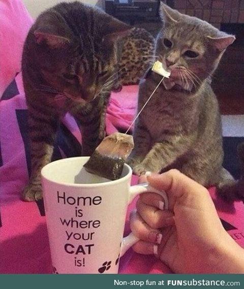 Dis is mine teabag