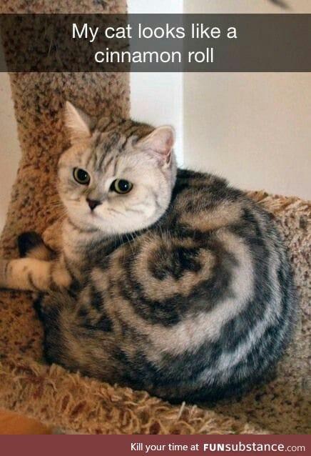 What nice fur of cat