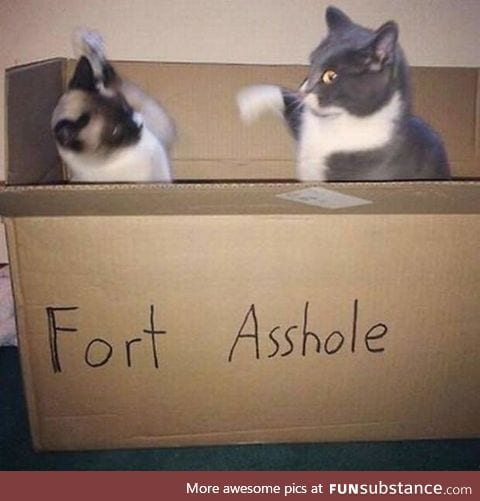 Fort asshole