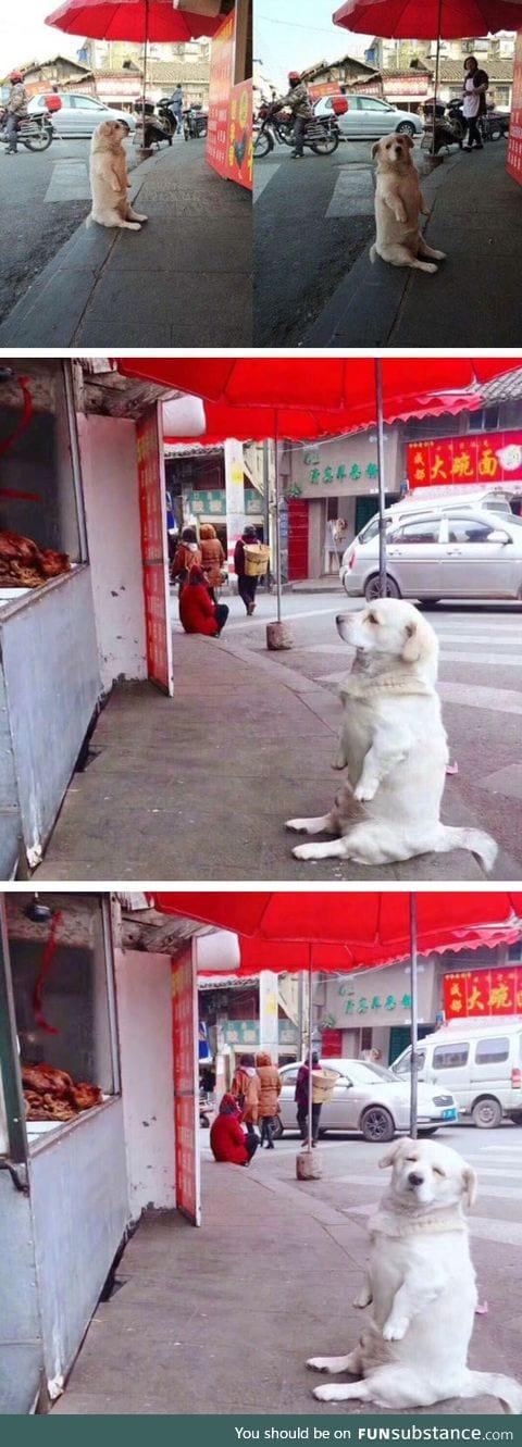 Doggo shamelessly begging for food