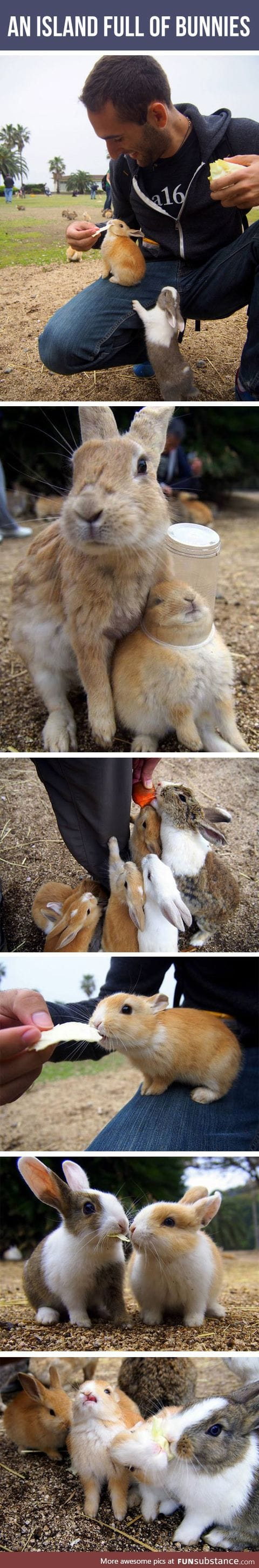 This Place Exists And It's Inhabited By Bunnies