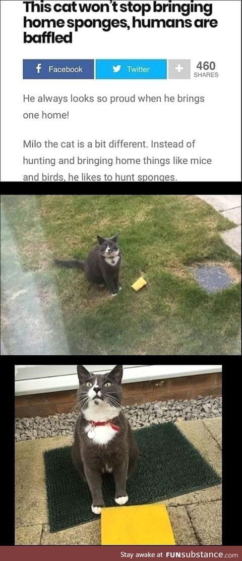 The cat that hunts sponges