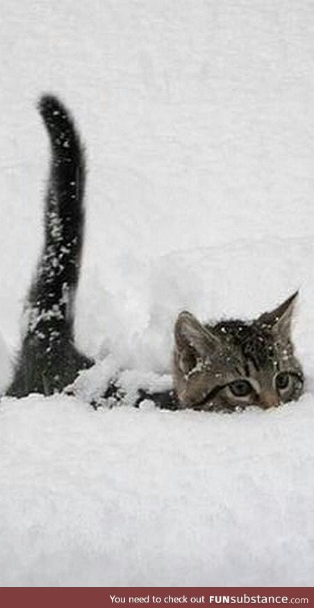 From under the snow, a cat appears