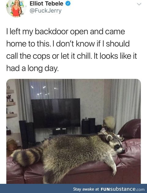 Raccoon and chill