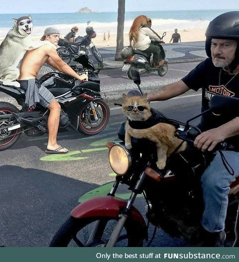 Rival biker gangs