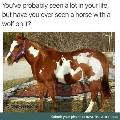Horse with a wolf marking. One in a million