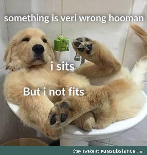 Big ol' doggo doin a h*ckin struggle