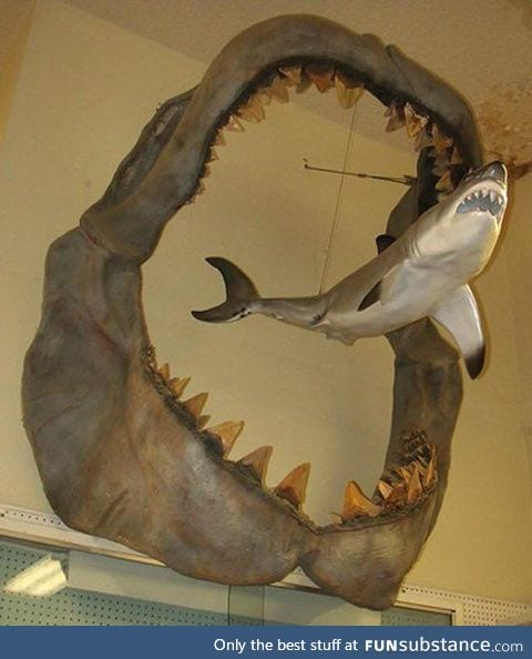A comparison showing the size of an ancient Megalodon compared to a modern day Great