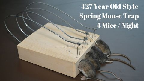 427 Year Old Style Spring Mouse Trap In Action. 4 Mice in 1 Night