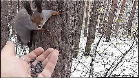 Birds and squirrels eat in a hand in a forest in winter..