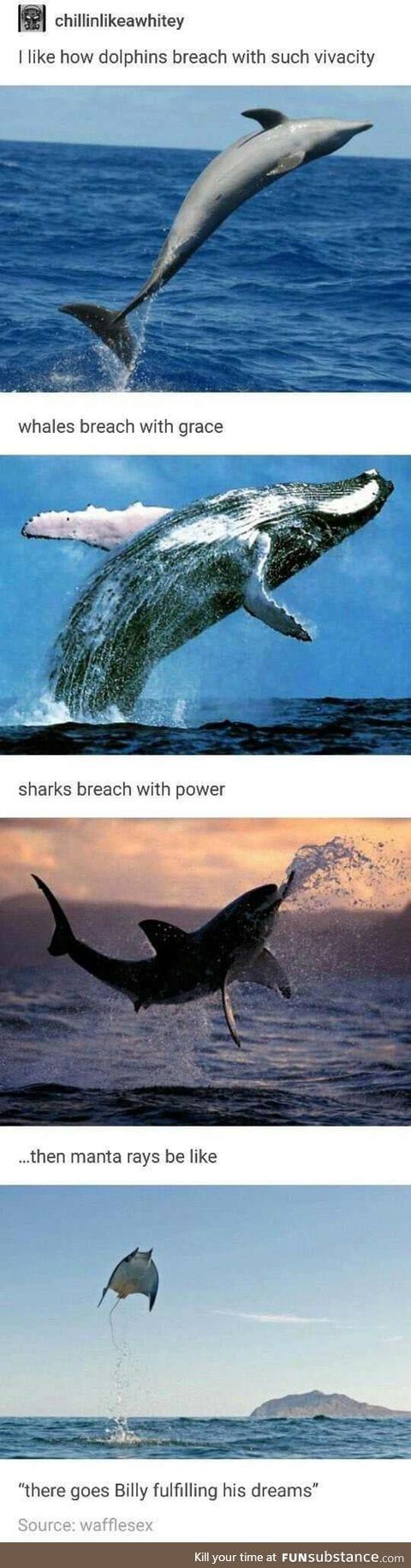Breachin'