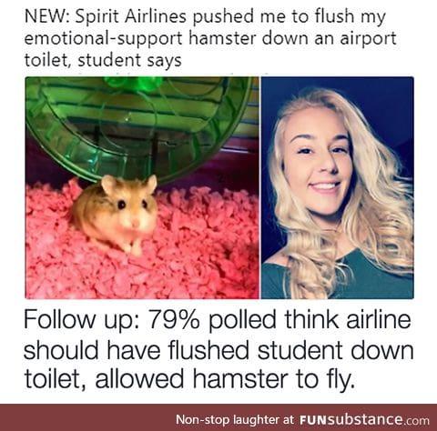Hamsterdam!