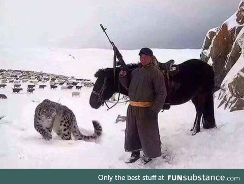 Forget a sheep dog, I want a sheep snow leopard.