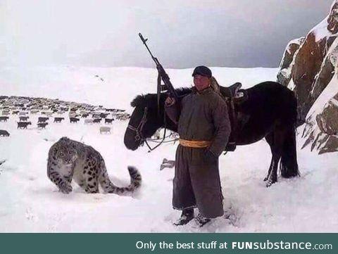 Forget a sheep dog, I want a sheep snow leopard.