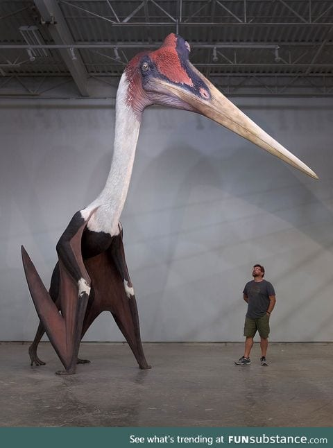 Quetzalcoatlus northropi model next to a 1.8m man. The largest known flying animal ever