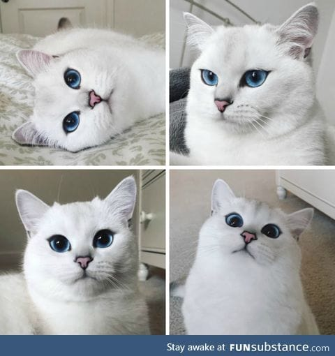 This Cat Has a Better Eyeliner Than You'll Ever Have in Your Entire Life