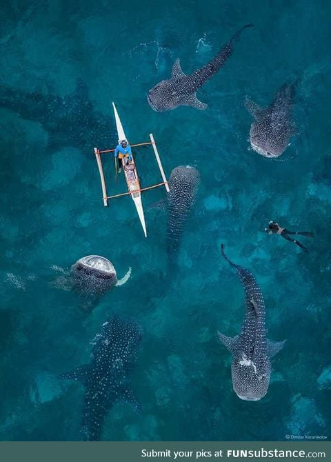 Whale shark party