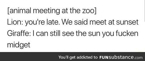 Lion meets the giraffe