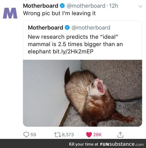 The ideal mammal