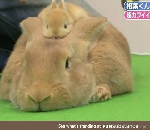 A bunny with a bunny hat!