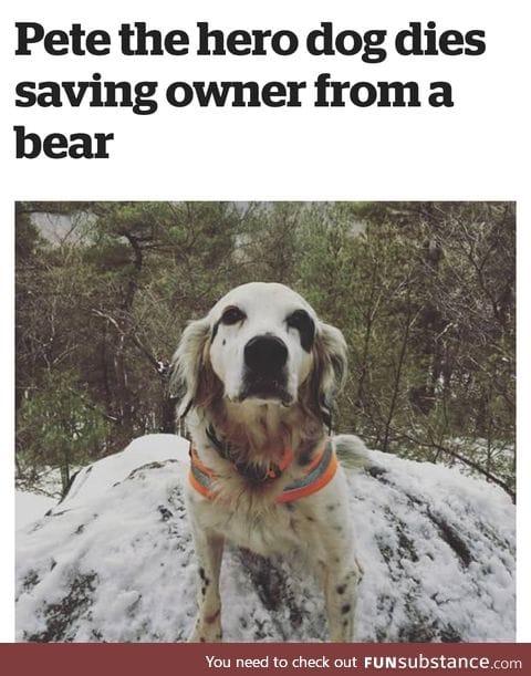 Brave Pupper :'(