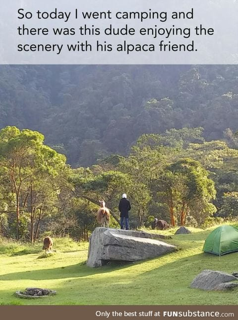 But where is my alpaca friend