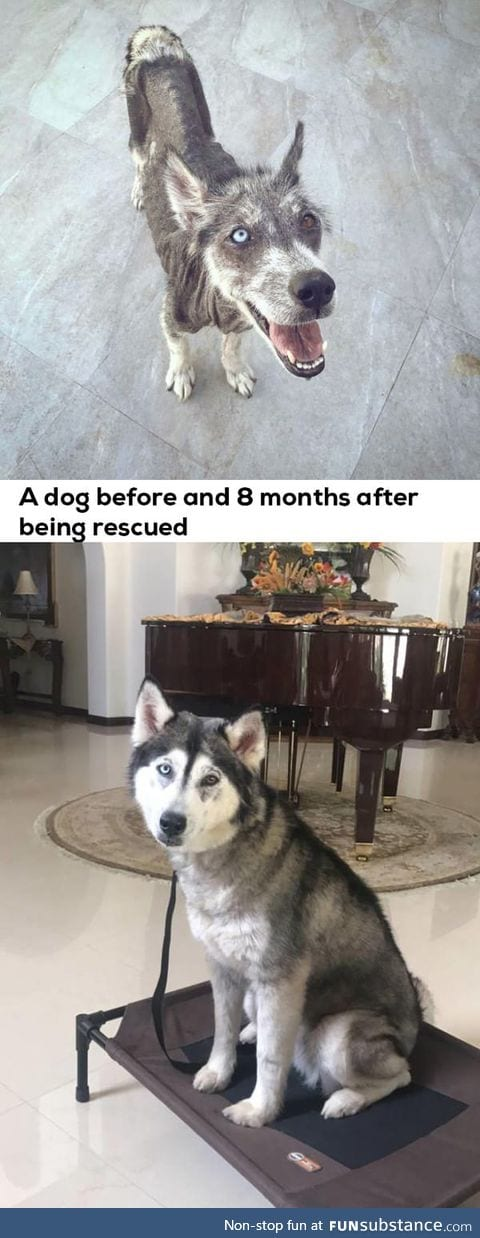 Adopt and change a life