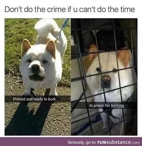 A message to doggos everywhere