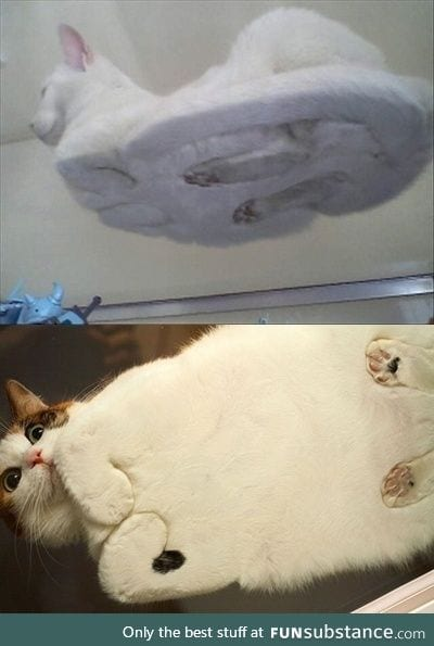 Cat loaves from the bottom