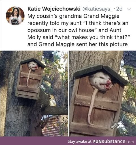 It's the opossum's house now