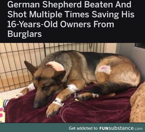 Very good boy