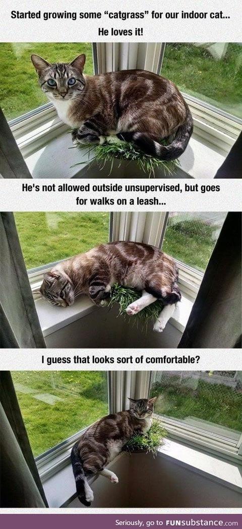 I dunno... Just let him outside?