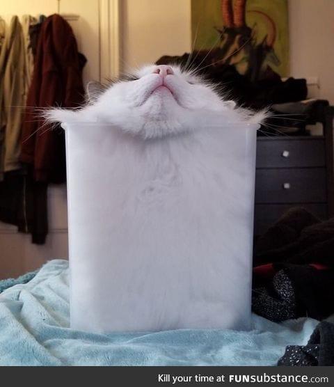 Proof that cat is liquid