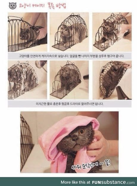 Japanese device for washing cats