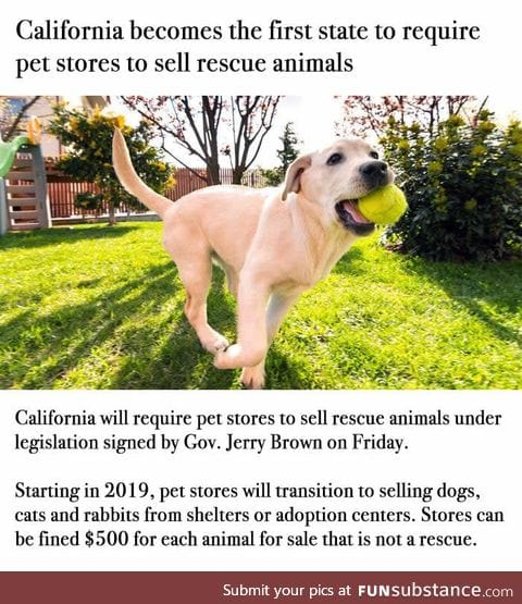 Sales from puppy mills are banned in California. Faith in humanity restored!