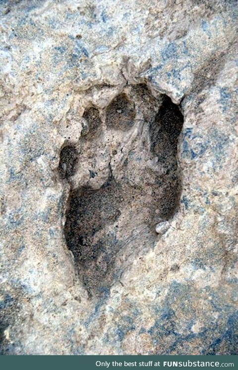 Earliest human footprints made 1.5 million years ago found in Kenya