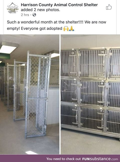 They all got adopted!!!