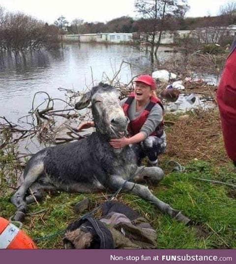 Donkey smiles after being rescued from flood in Ireland