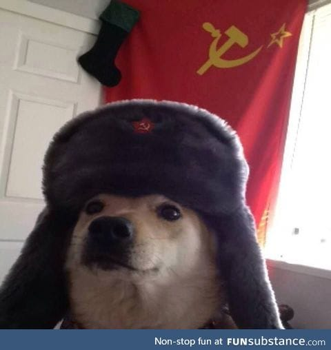 Slav doggo is here, you may ignore the shitposts