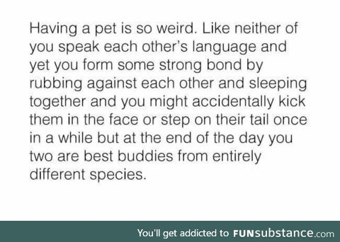 Having a pet is awesome