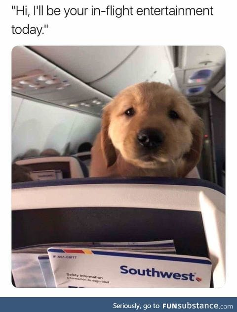 I would dead ass take the longest flight in the world without hesitation